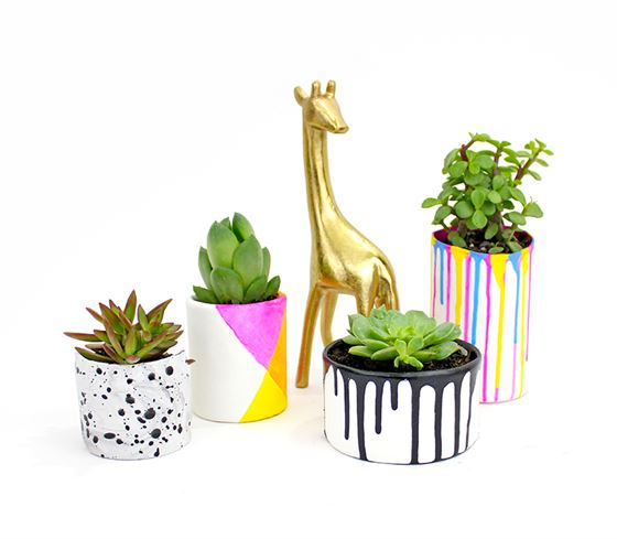 Ciceroni's DIY Planter Ideas for a Green Home