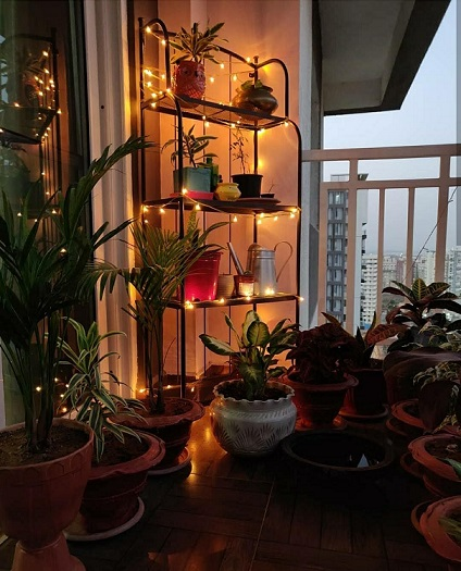 DIY planter – balcony – terrace garden – bonsai – planters at home – home décor - do it yourself – upcycle planters – garden – gardening – interior design – landscaping – anuja cambatta – planters - indoor plants – nursery - botanical gardens - garden ideas- flower garden - gardening tools – ciceroni – Ahmedabad – baroda – surat – dragonfly farm
